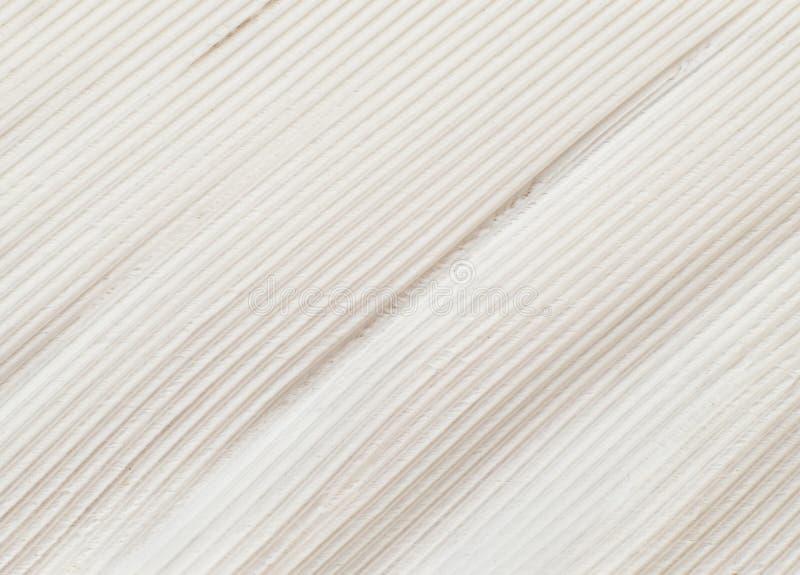 Перо крупного плана птицы стоковые фото