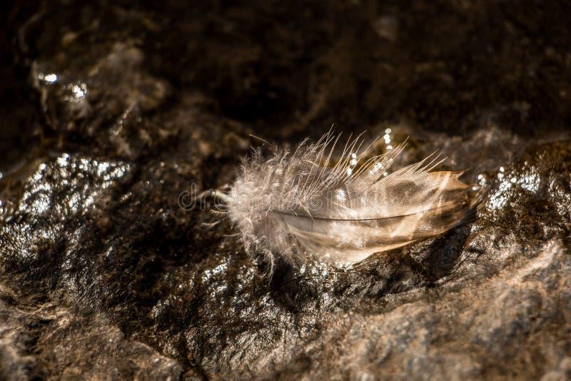 Перо на камне стоковое изображение rf