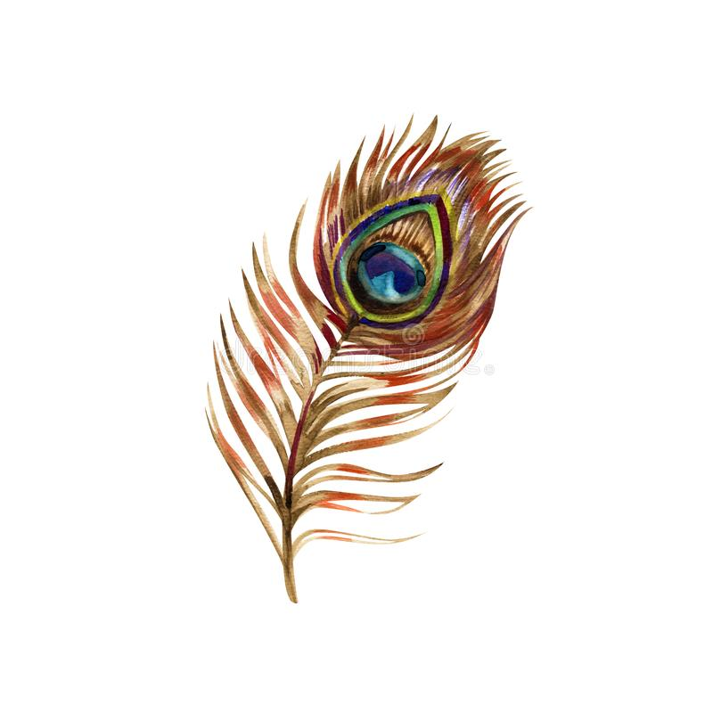 Перо павлина, картина акварели, изолированная на белой предпосылке иллюстрация штока