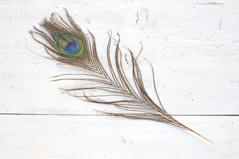 Перо павлина на белой деревянной предпосылке стоковая фотография