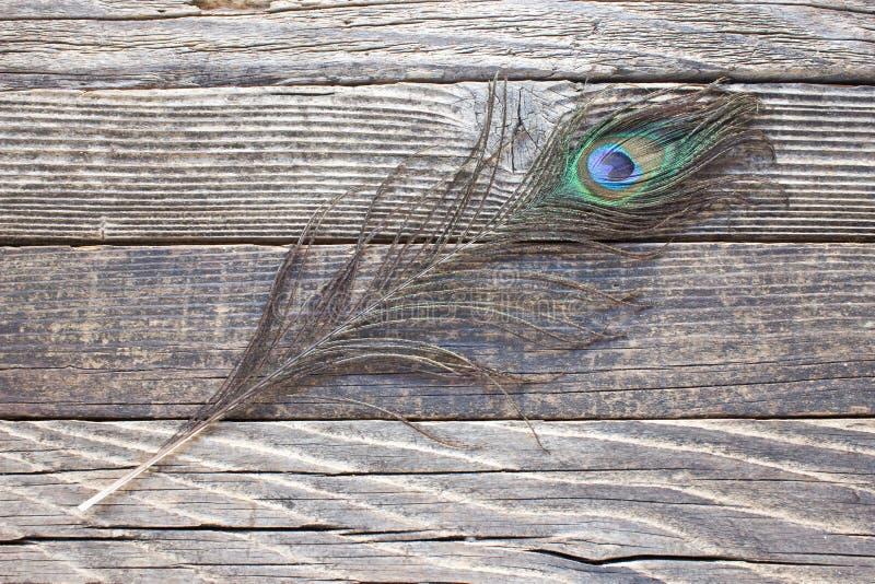Перо павлина на деревянной предпосылке стоковые фото