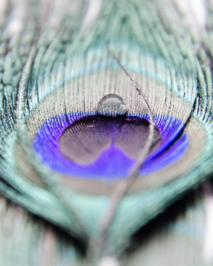 Перо павлина стоковое изображение