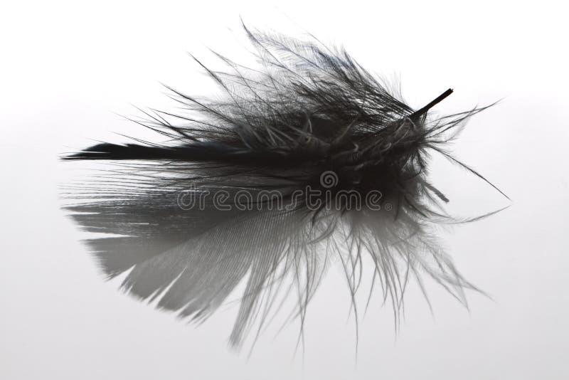 Download перо птицы стоковое фото. изображение насчитывающей сочинитель - 18392890