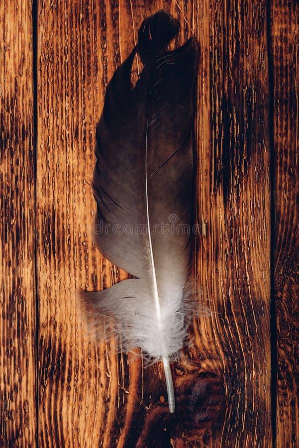 Перо ястреба над деревянным столом стоковое изображение