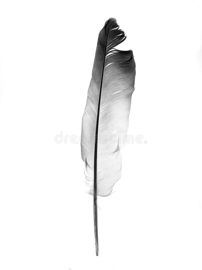 перо стоковая фотография rf