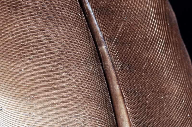 перо стоковое фото rf