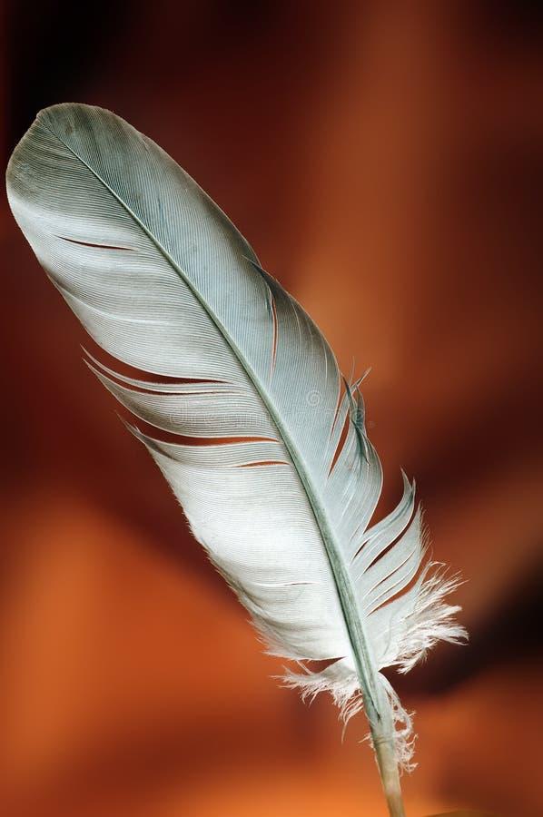 перо стоковое изображение