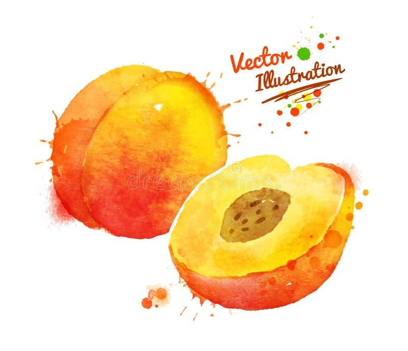 Персик акварели бесплатная иллюстрация