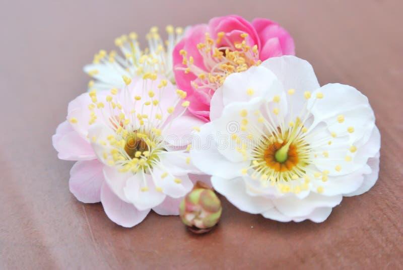 персик бутона цветений стоковое изображение rf