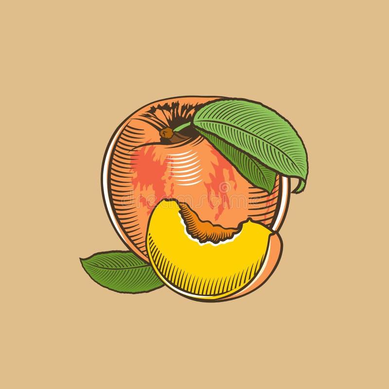 Персик в винтажном стиле Покрашенная иллюстрация вектора иллюстрация штока
