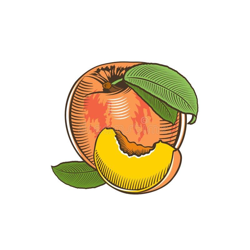 Персик в винтажном стиле иллюстрация штока