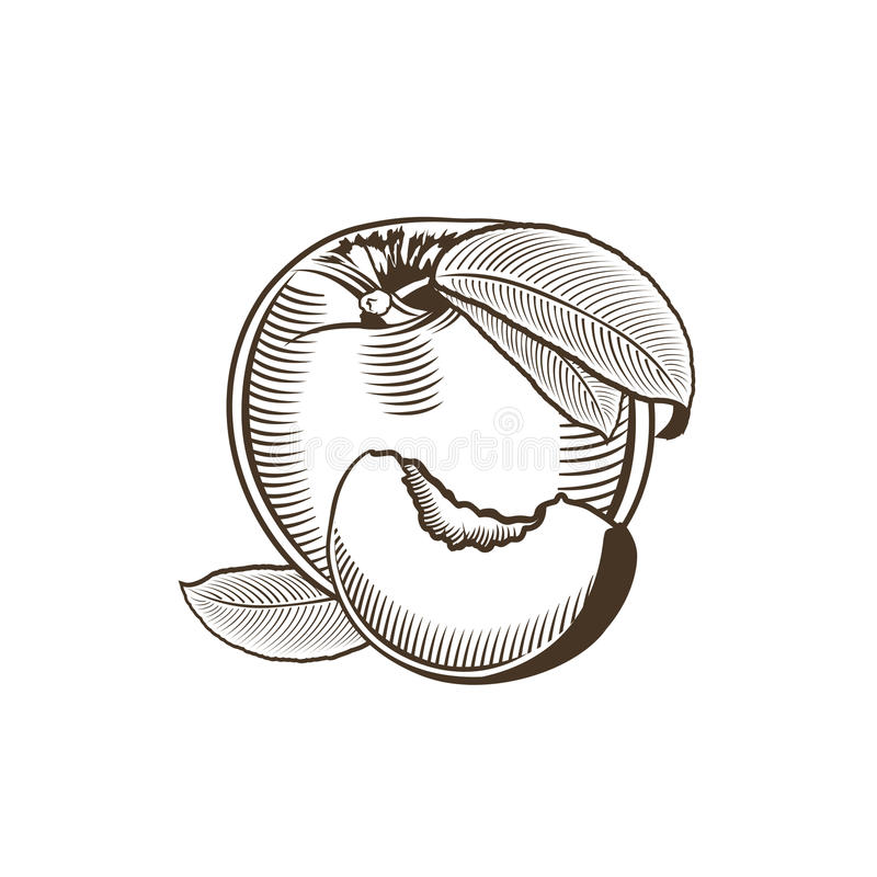 Персик в винтажном стиле бесплатная иллюстрация
