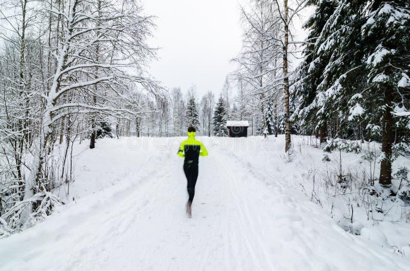 Персона бежать в снеге покрыла лес стоковые фотографии rf