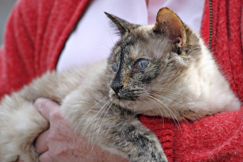 персона удерживания кота стоковое изображение