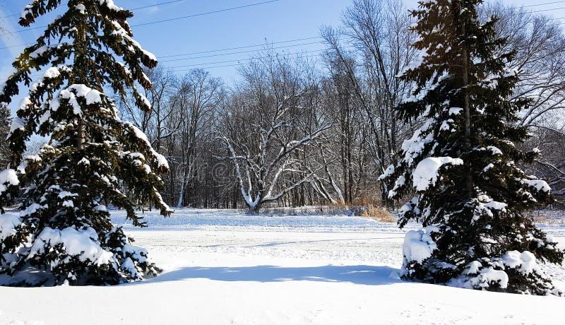 Перспектива зимы стоковое изображение rf