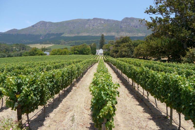 Перспектива сняла виноградника около Кейптауна, Южной Африки стоковое фото