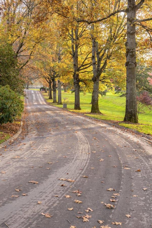Перспективы дороги в парке Портленде ИЛИ стоковая фотография rf