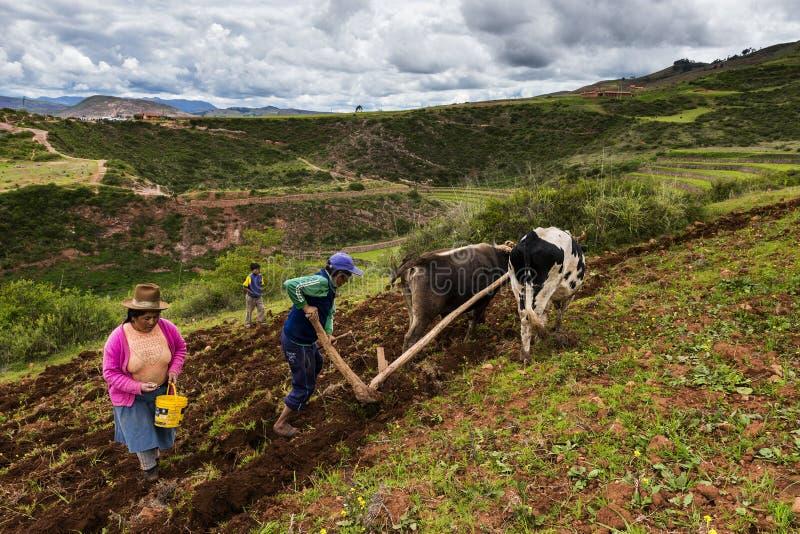 Перуанская семья вспахивая землю около Maras, Перу стоковая фотография rf