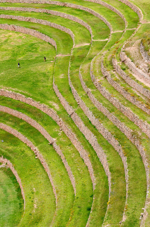 Перу, террасы Inca мурены стоковые фотографии rf