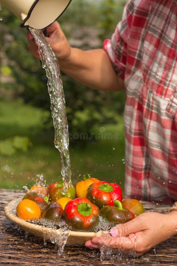 Перцы и томаты под проточной водой стоковое изображение