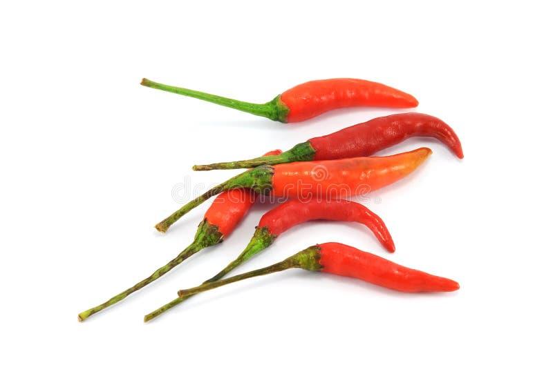 Перцы красных чилей стоковое фото rf