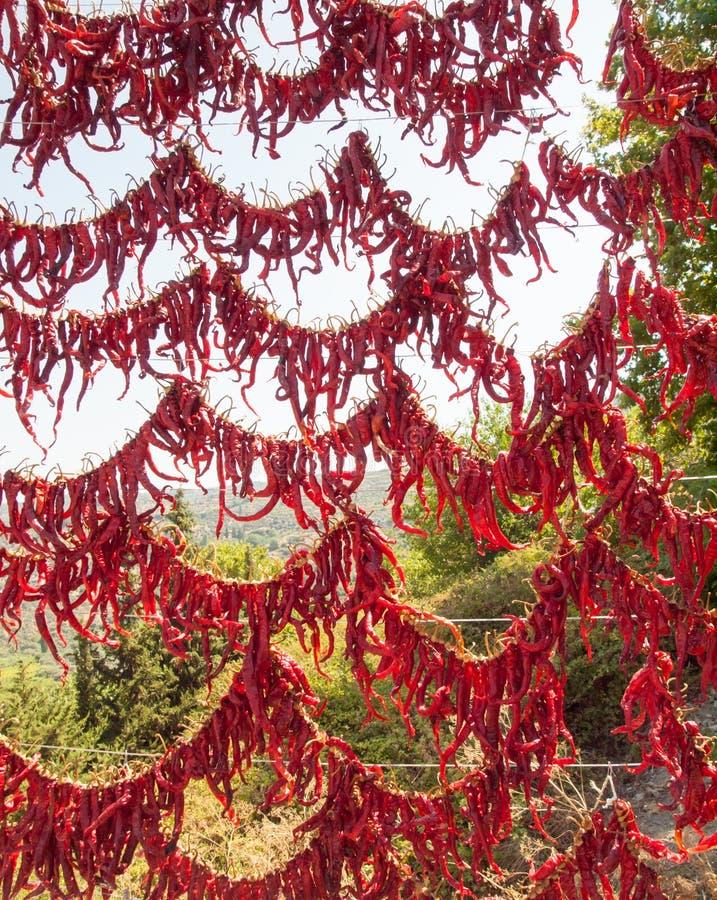 Перцы красных чилей на стеллаже для просушки стоковое фото rf