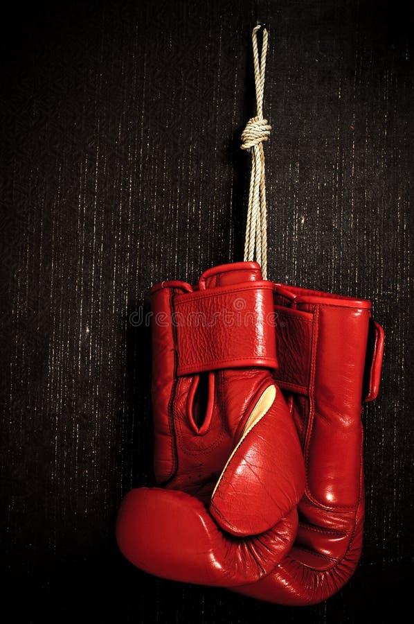 перчатка бокса стоковые изображения