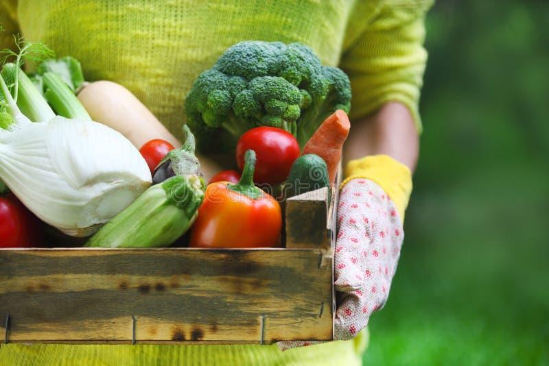 Перчатки женщины нося с свежими овощами в коробке в ее Хане стоковая фотография rf
