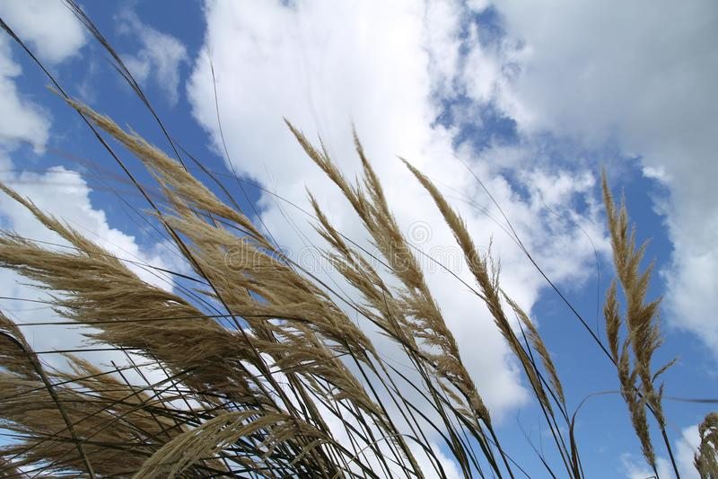 Пер Брауна против голубого неба покрытого с белыми облаками стоковые фотографии rf