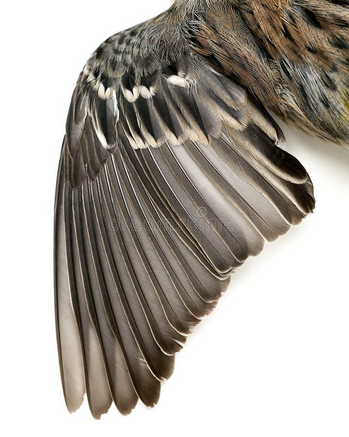 Пер крыла птицы стоковое фото rf