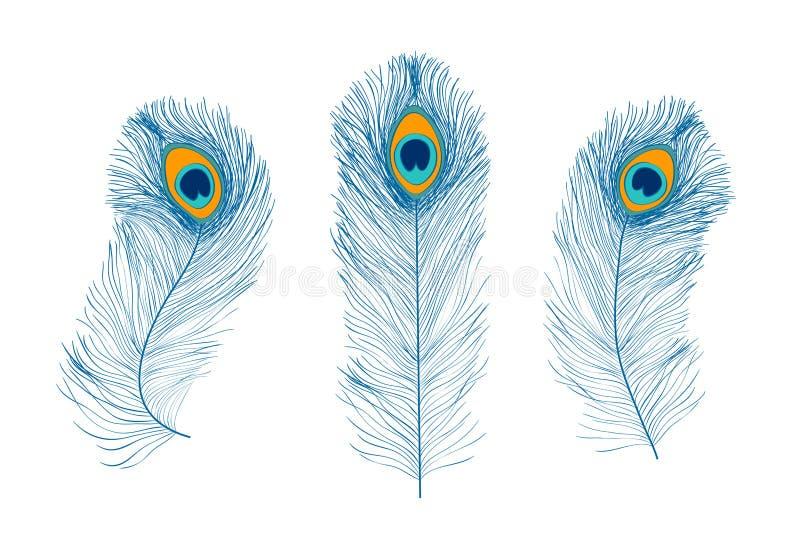 Пер павлина, плоский стиль Прямой и изогнутый Голубые покрашенные пер экзотических птиц бесплатная иллюстрация