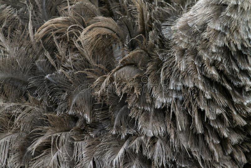 Пер страуса для картины стоковые фотографии rf