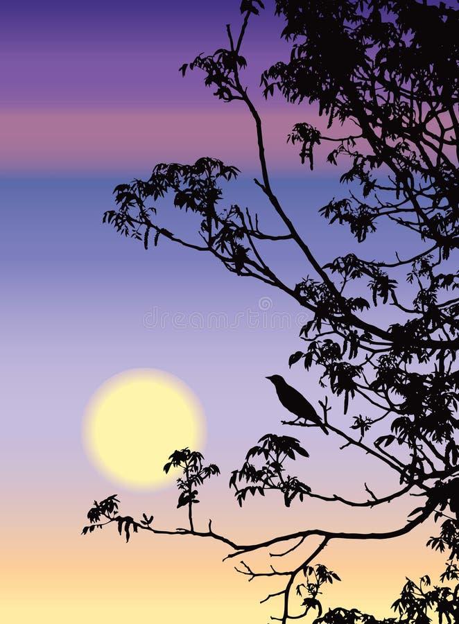 Download песня соловья Стоковая Фотография RF - изображение: 13796757