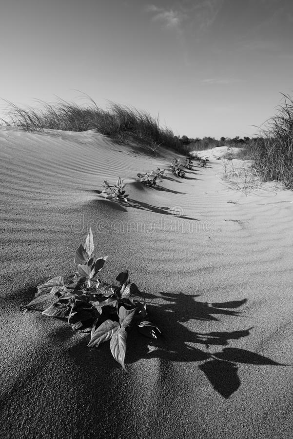 песок высокого ряда дюны динамически стоковое фото