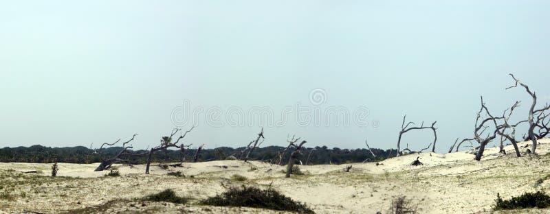 песок дюн панорамный Стоковые Изображения RF