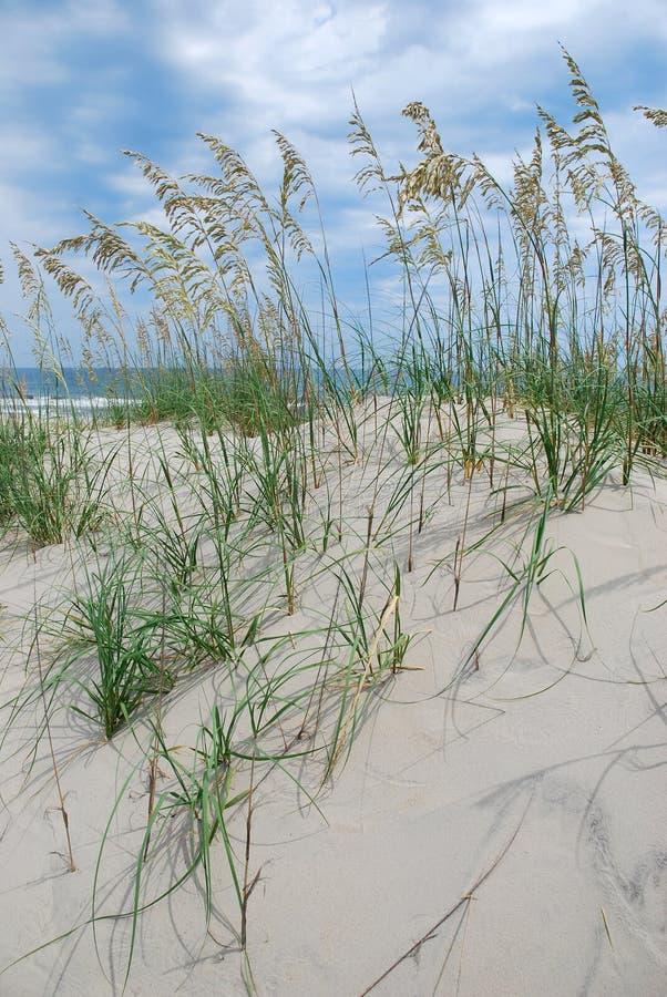 песок дюн пляжа стоковая фотография rf