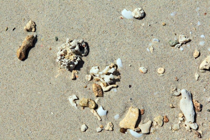 Песок коралла стоковое изображение