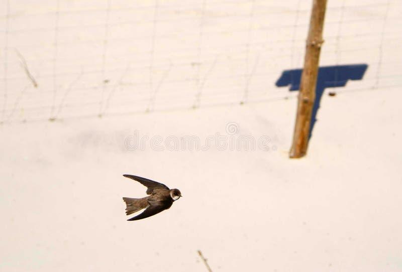 Песок Мартин в окружающей среде стоковые фотографии rf