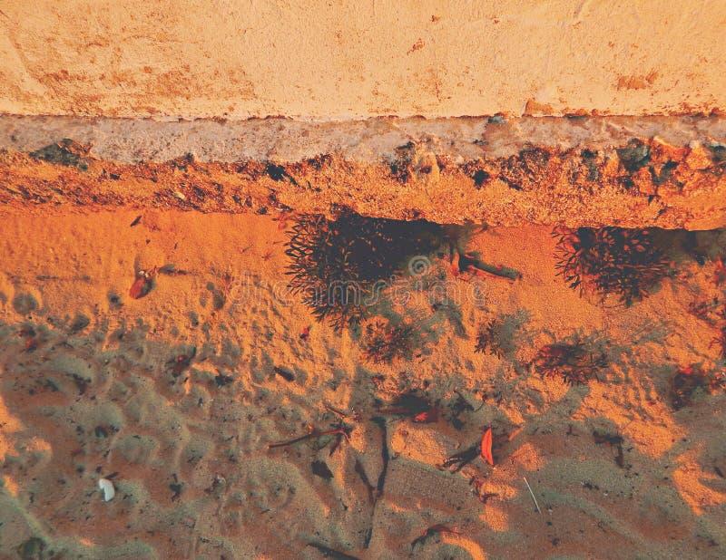 Песок предпосылки с заводами и покрашенной стеной на заходе солнца стоковые фото