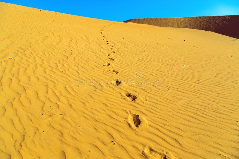 Песок пустыни дюны стоковое изображение rf