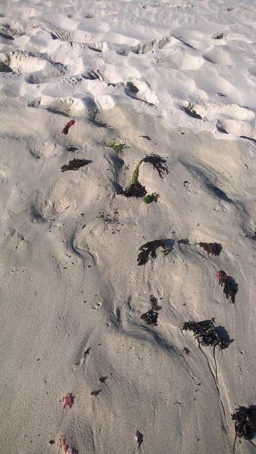 Песок пляжа на крае вод стоковое изображение rf