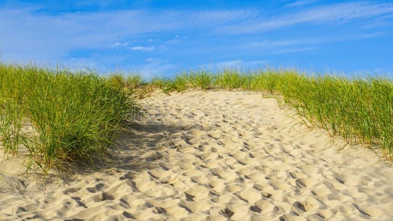 Песок, пляж, треска накидки Новая Англия травы стоковые фото