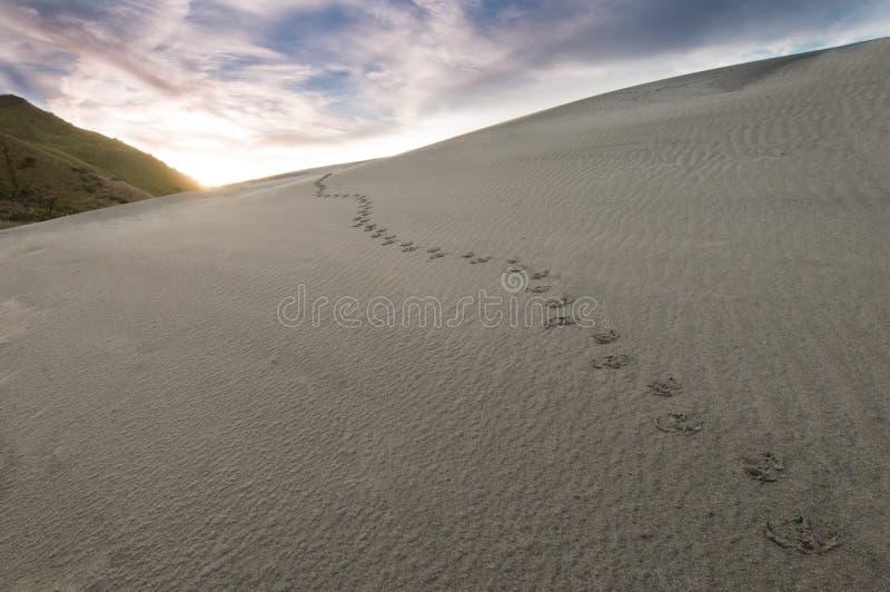 Download песок следов ноги стоковое фото. изображение насчитывающей песок - 18377782