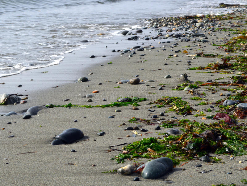 Песок, утесы, и морская водоросль стоковая фотография