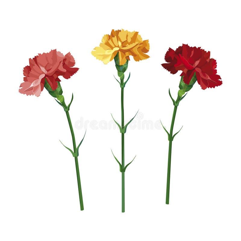 Пестротканая гвоздика цветков в бутылке в опарнике Желтый, пинк и красный гвоздика Изолировано на белизне иллюстрация вектора