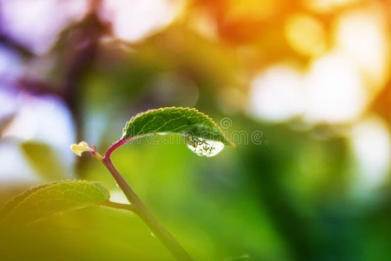 Пестротканые лист с падением росы Капельки фото макроса стоковое изображение rf