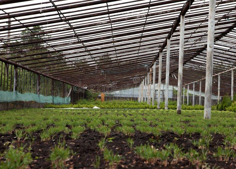 Пестротканые орнаментальные заводы, кустарники и цветки, который выросли для садовничать в современном hydroponic парнике стоковая фотография