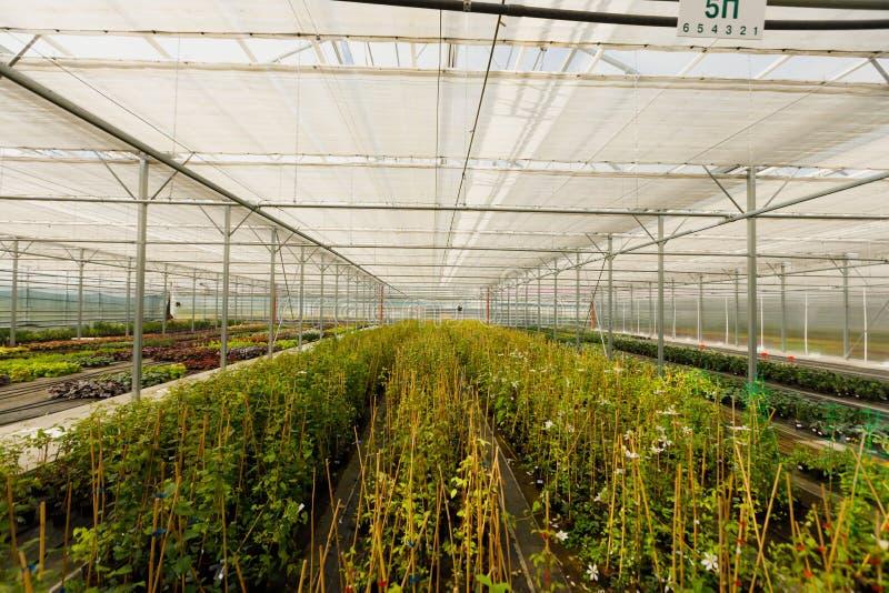 Пестротканые орнаментальные заводы, кустарники и цветки, который выросли для садовничать в современном парнике с системой контрол стоковые фотографии rf