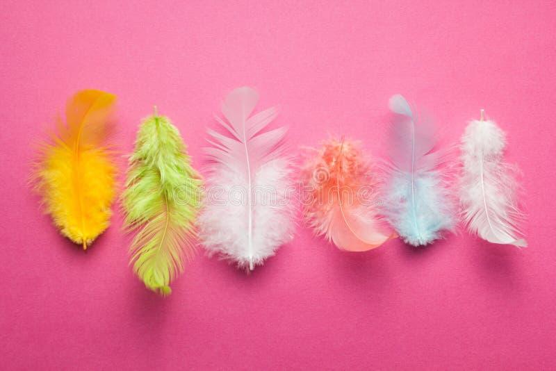 Пестротканые пер райской птицы на розовой предпосылке стоковые фотографии rf