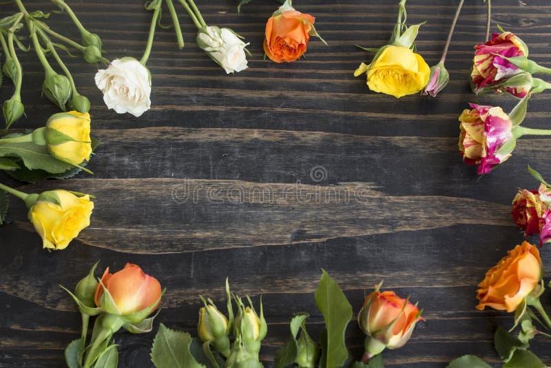 Пестротканые розы с космосом экземпляра стоковое фото rf